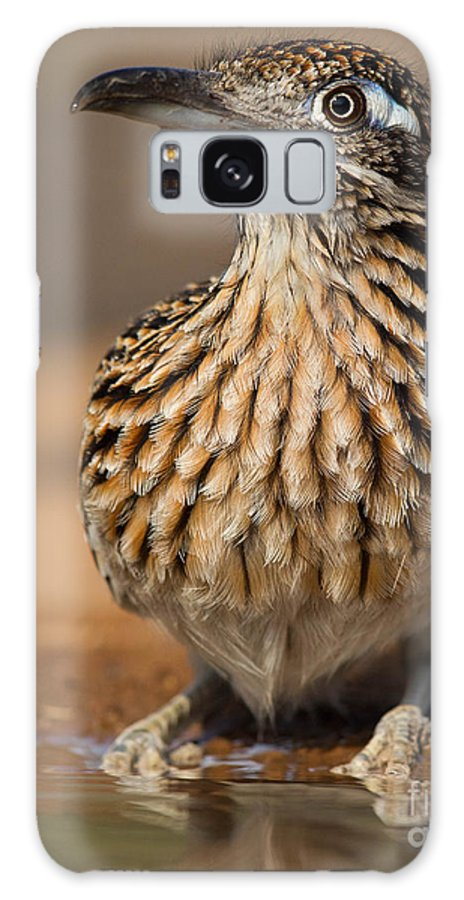 Greater Roadrunner Galaxy S8 Case featuring the photograph Greater Roadrunner No 1 by Jerry Fornarotto