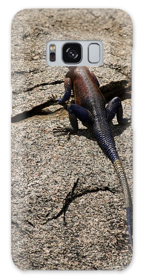 Red-headed Lizard Galaxy S8 Case featuring the photograph Rock Island Lizard  #8103 by J L Woody Wooden