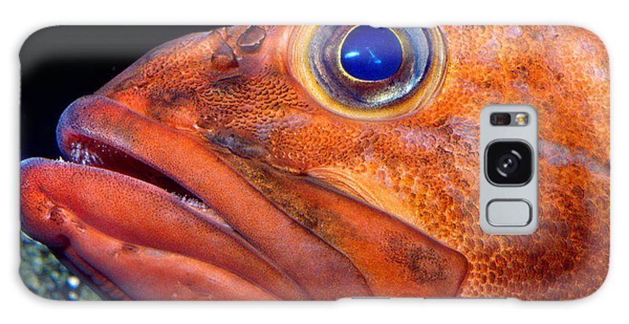 Rockfish Face Galaxy S8 Case featuring the photograph Rockfish Face by Wernher Krutein
