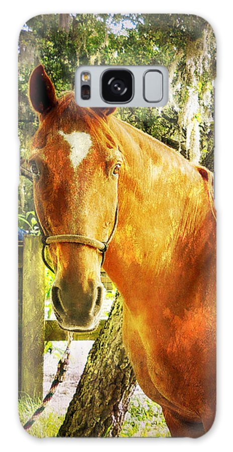 Horse Galaxy S8 Case featuring the photograph Romeo by Judy Hall-Folde