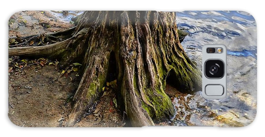 Landscape Galaxy S8 Case featuring the photograph Rooted by Randal Bruck