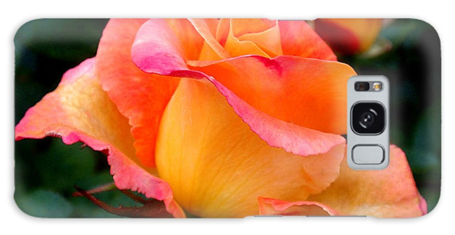 Rose Galaxy S8 Case featuring the photograph Rose Beauty by Rona Black