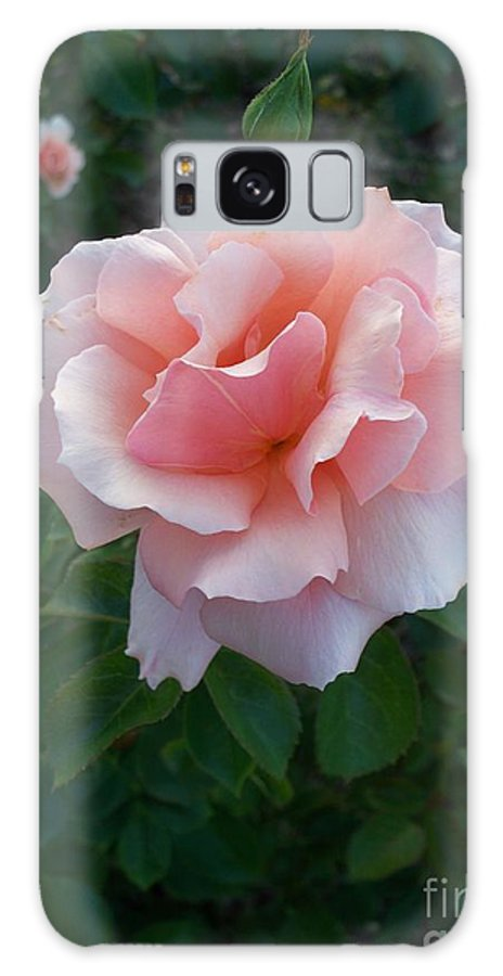 Pink Galaxy S8 Case featuring the photograph Rose by Eric Schiabor