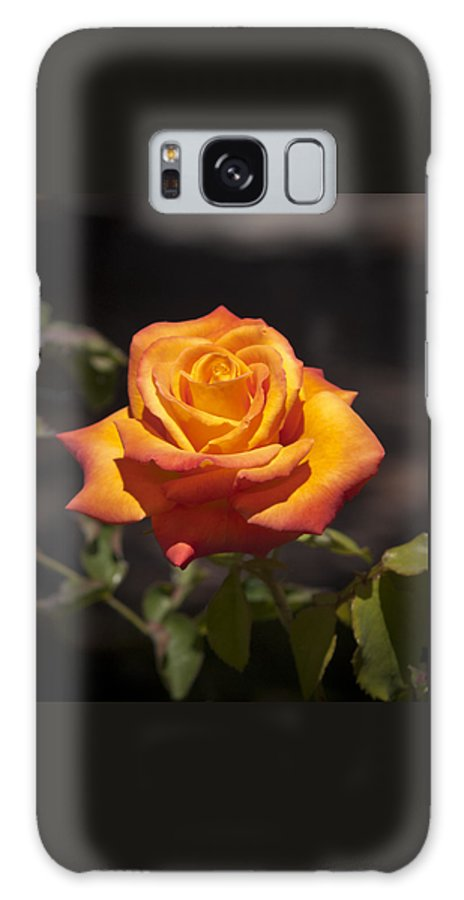 Flower Galaxy S8 Case featuring the photograph Rose Glow by Clifford Beck