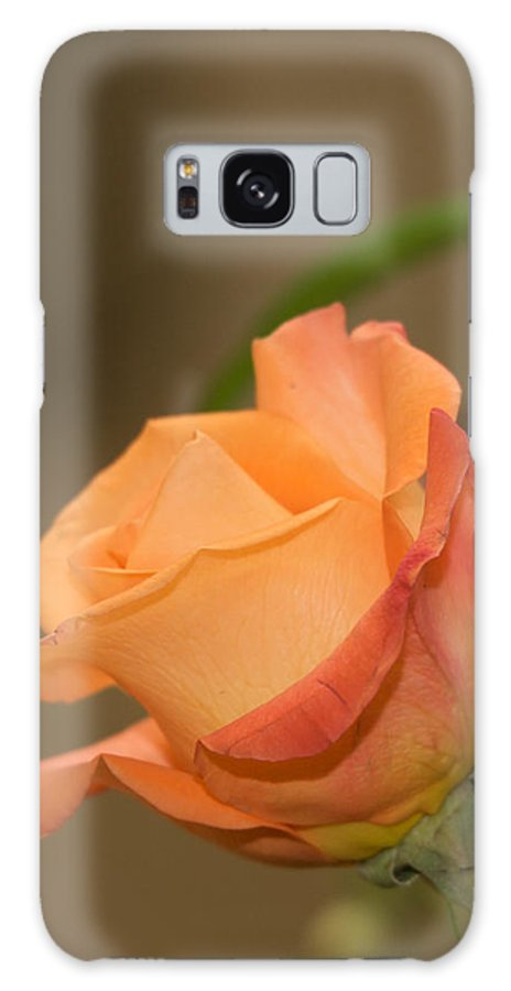 Flower Galaxy S8 Case featuring the photograph Rose by Karen Swartz Photography