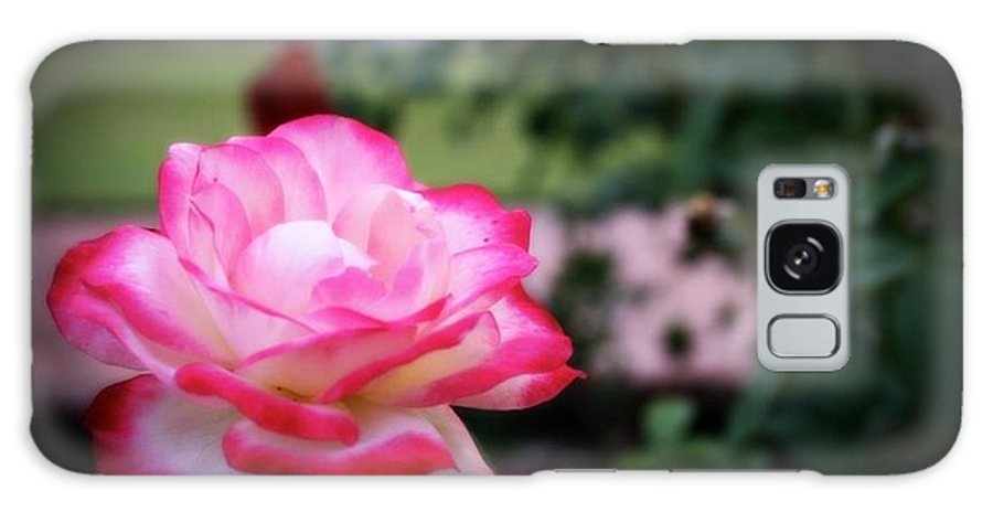 Flower Galaxy S8 Case featuring the photograph Rose by Luisa Garcia