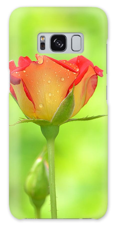 Rose Galaxy S8 Case featuring the photograph Rose On Green by Kathy Gibbons