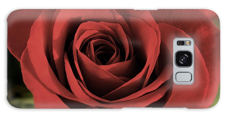Rose Galaxy S8 Case featuring the photograph Rose by Photographic Arts And Design Studio