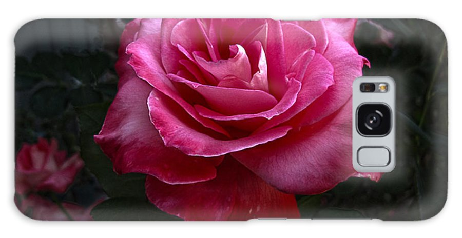 Rose Galaxy S8 Case featuring the photograph Rose Rose by Helaine Cummins