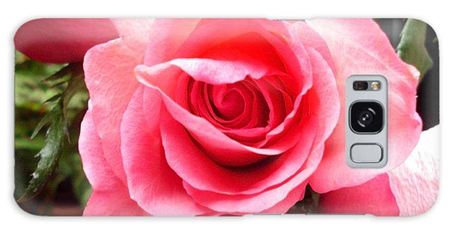 Roses Galaxy S8 Case featuring the photograph Rose Roses by Sheryl Chapman Photography