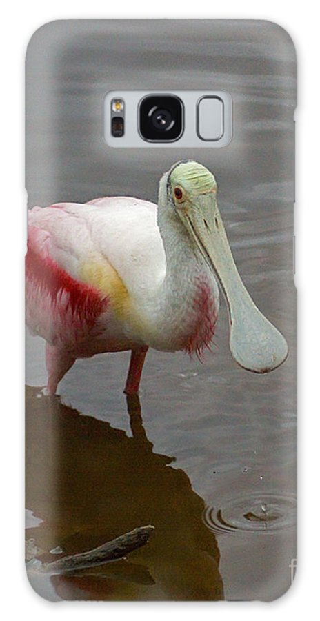 Roseate Spoonbill Galaxy S8 Case featuring the photograph Roseata Spoonbill  #4822 by J L Woody Wooden