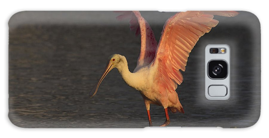 Roseate Spoonbill Galaxy S8 Case featuring the photograph Roseate Spoonbill Photograph by Meg Rousher