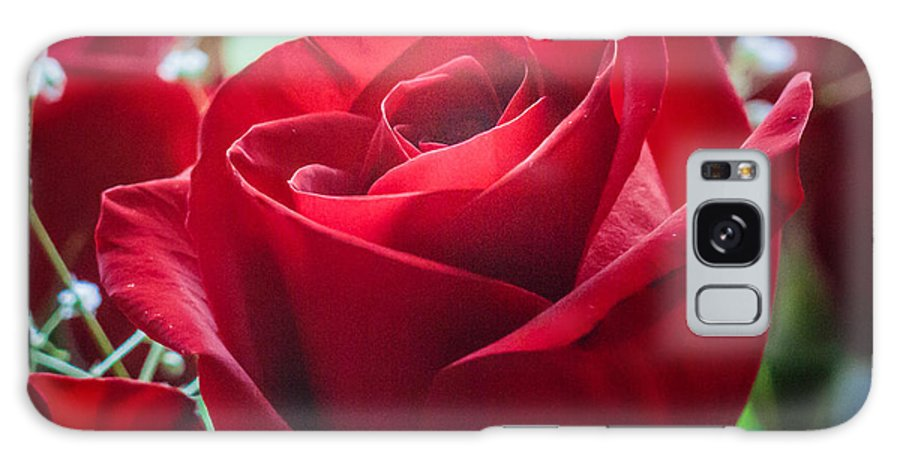 Flowers Galaxy S8 Case featuring the photograph Roses In The Window by Shari Brase-Smith