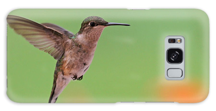 Ruby-throated Hummingbird Galaxy S8 Case featuring the photograph Ruby-throated Hummingbird by Jaron Wood