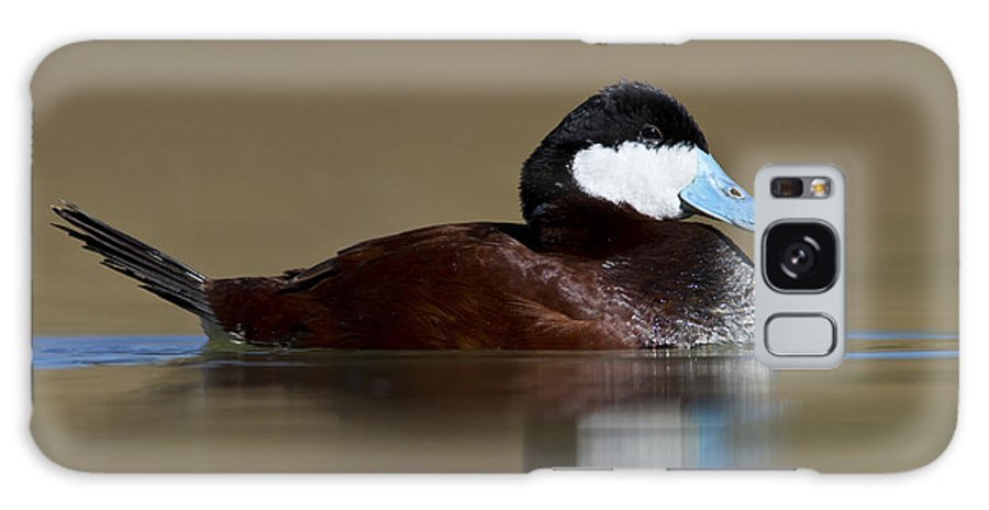 Ruddy Duck Galaxy S8 Case featuring the photograph Ruddy Duck On Still Pond by Bryan Keil