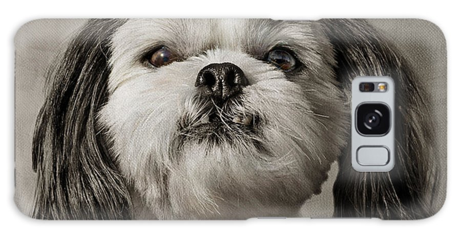 Dogs Galaxy S8 Case featuring the photograph Rudy by Nikolyn McDonald