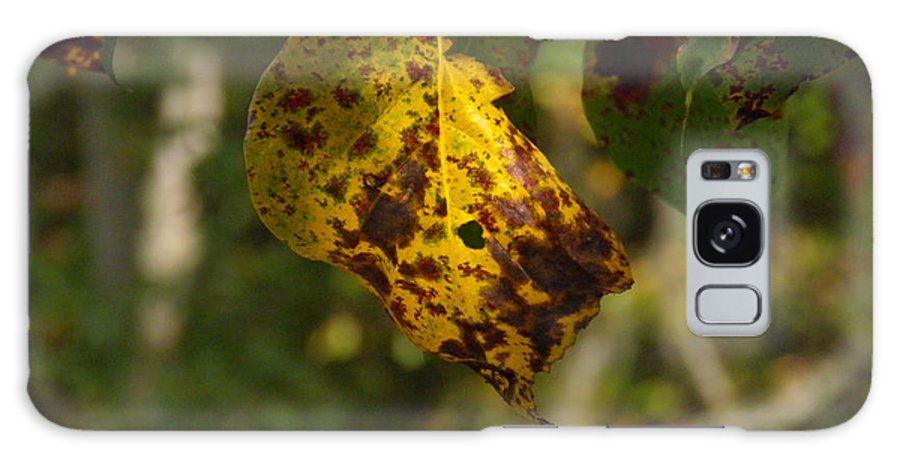 Yellow Galaxy S8 Case featuring the photograph Rusty Leaf by Nick Kirby