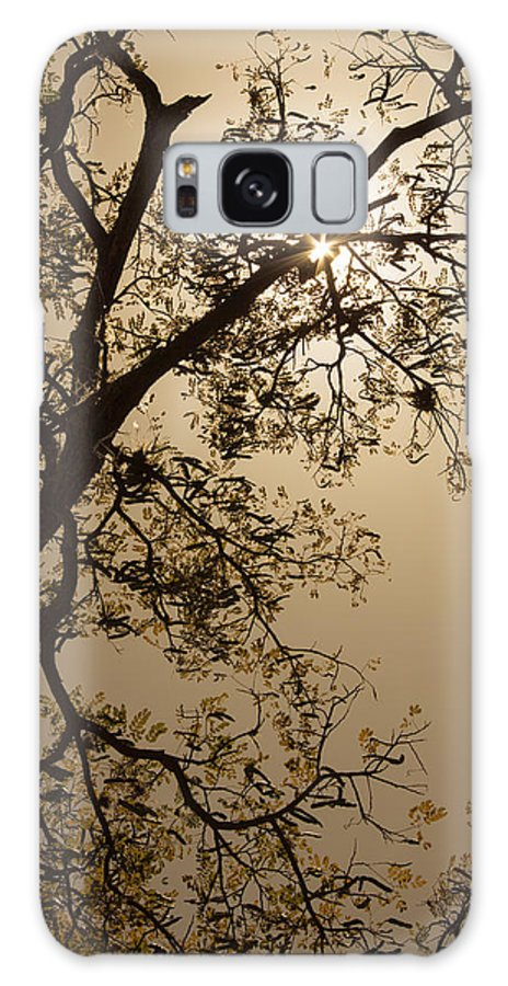 Saman Galaxy S8 Case featuring the photograph Saman In The Sky by Juan Carlos Lopez