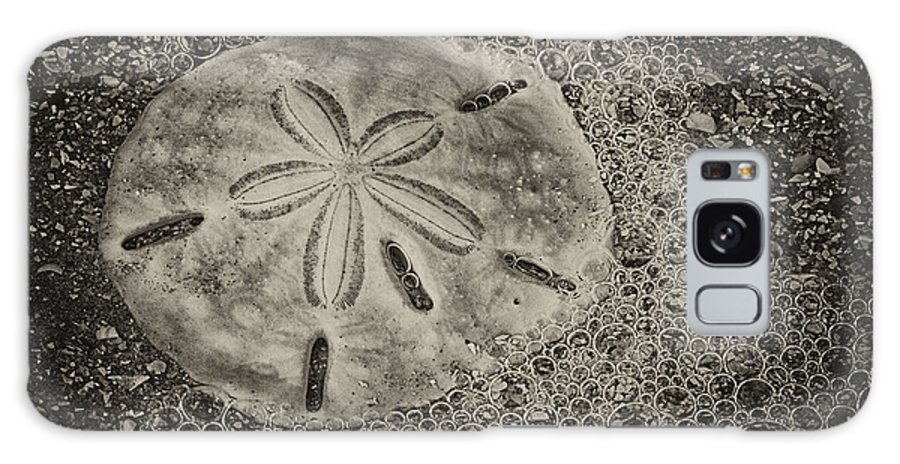 Sand Dollar Galaxy S8 Case featuring the photograph Sand Dollar 3 Black And White Botany Bay by Carrie Cranwill