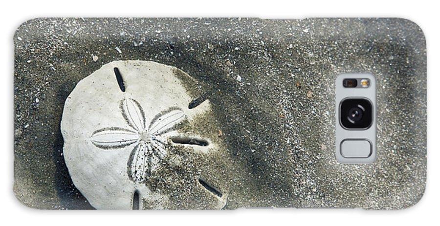 Bull Island Galaxy S8 Case featuring the photograph Sand Dollar On Boneyard Beach by Carrie Cranwill