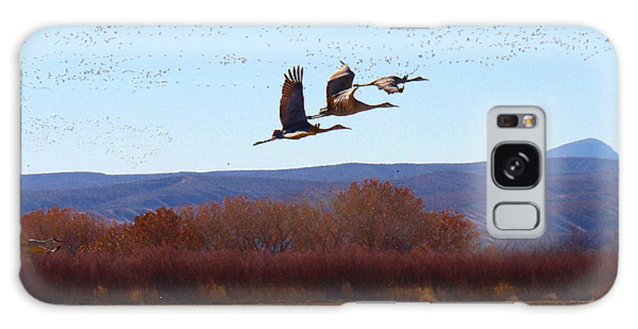 Roena King Galaxy S8 Case featuring the photograph Sandhill Cranes 6 by Roena King