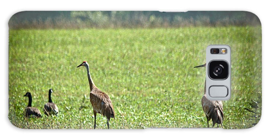 Sandhill Cranes Galaxy S8 Case featuring the photograph Sandhill Cranes And Friends by Cheryl Baxter