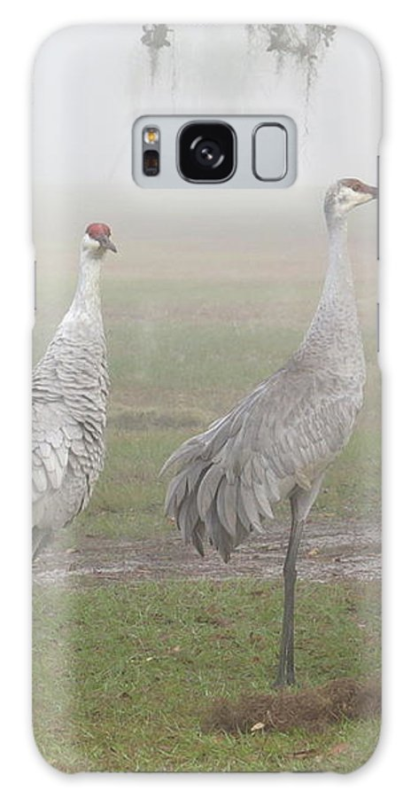 Sandhill Cranes Galaxy S8 Case featuring the photograph Sandhill Cranes In A Foggy Morning by Zina Stromberg