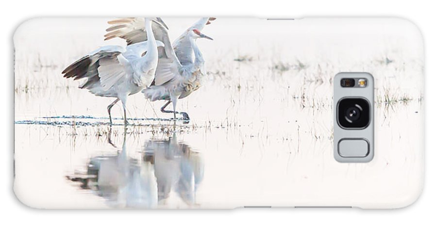 Isleton Crane Refuge Galaxy S8 Case featuring the photograph Sandhill Promenade by Leslie Morris