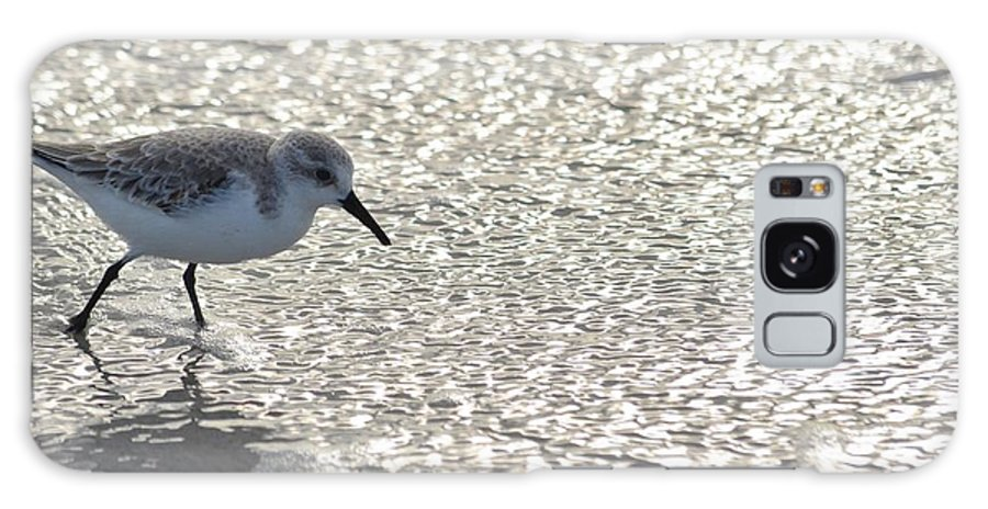 Shore Birds Galaxy S8 Case featuring the photograph Sandpiper Reflections II by Carol McGunagle