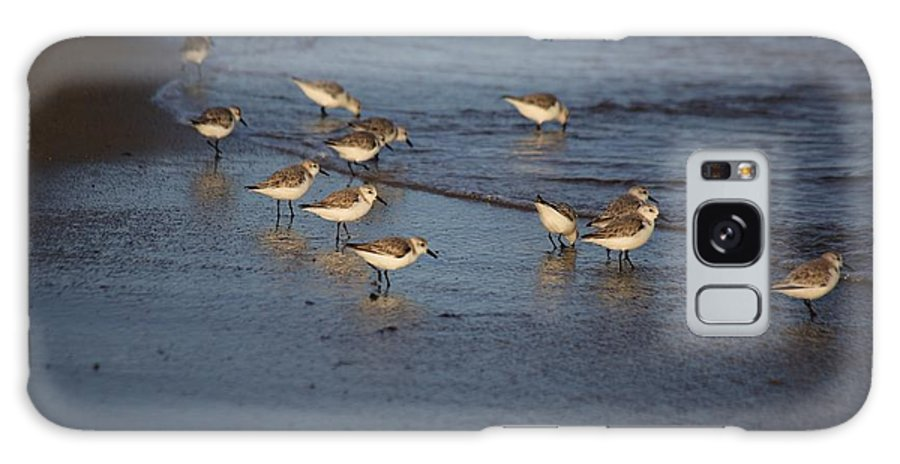 Sandpipers Galaxy S8 Case featuring the photograph Sandpipers 5 by Allan Morrison