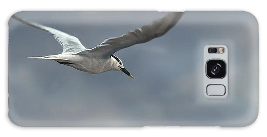 Bird Galaxy S8 Case featuring the digital art Sandwich Tern by Aaron Blaise