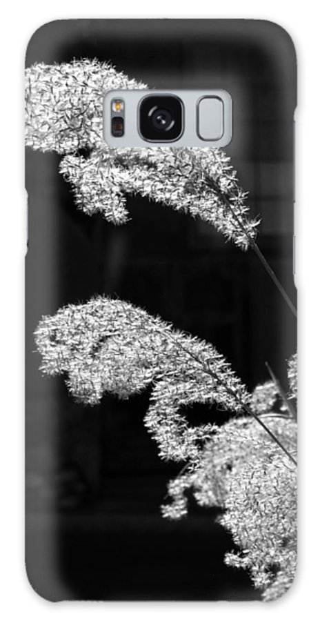 Black And White Galaxy S8 Case featuring the photograph Santa Fe Feather Duster by Jeff Brunton
