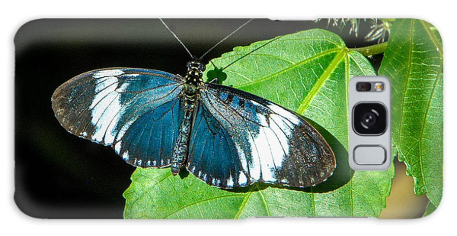 Sapho Longwing Galaxy S8 Case featuring the photograph Sapho Longwing Butterfly by Grace Grogan