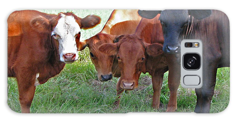 Cows Galaxy S8 Case featuring the photograph Say Moooooo 6377 by T Guy Spencer