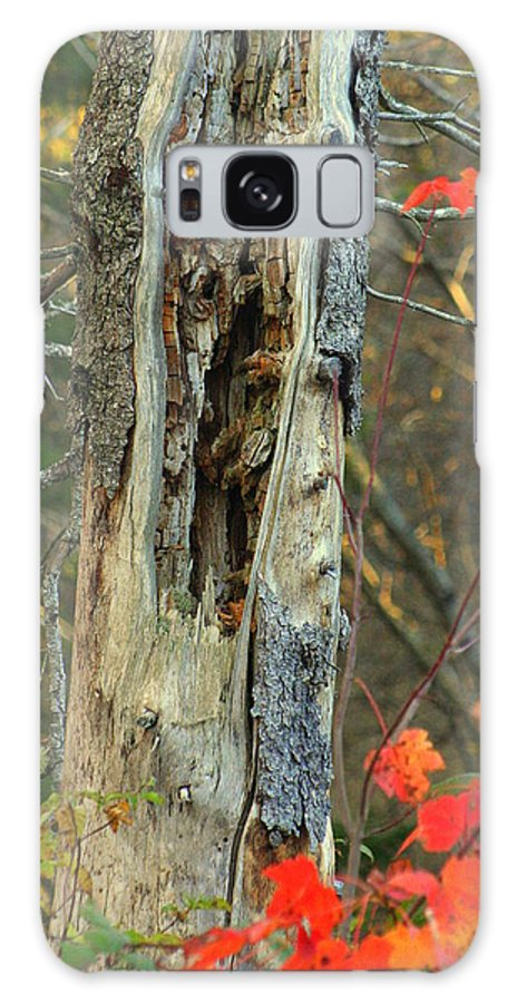 Fall Colors Galaxy S8 Case featuring the photograph Scar by Sue Long