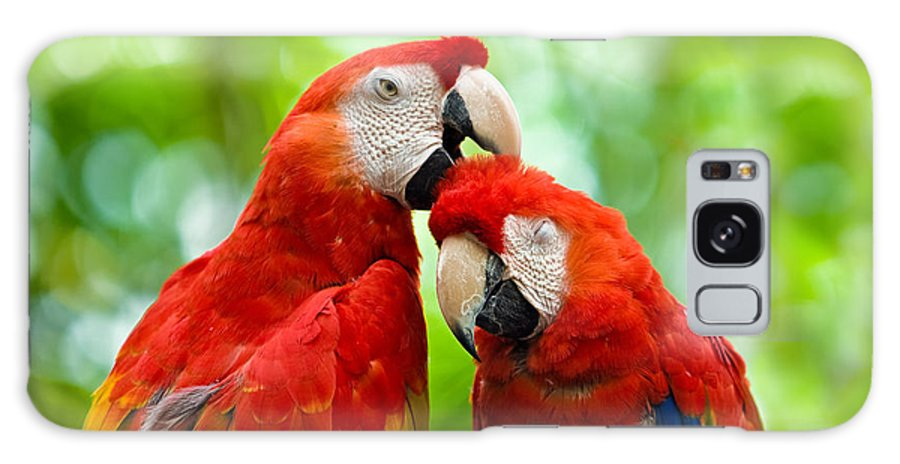 Scarlet Macaw Galaxy S8 Case featuring the photograph Scarlet Macaws by Chuck Underwood