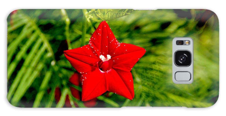 Scarlet Morning Glory Galaxy S8 Case featuring the photograph Scarlet Morning Glory - Horizontal by Ramabhadran Thirupattur
