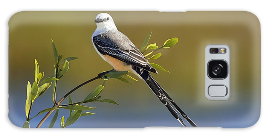 Dodsworth Galaxy S8 Case featuring the photograph Scissor-tailed Flycatcher by Bill Dodsworth