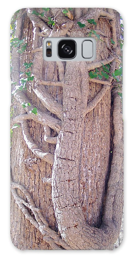 Tree Galaxy S8 Case featuring the photograph Scorpion Tree by Richard Bryce and Family
