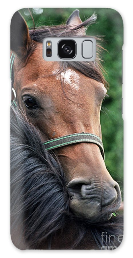 Horse Portrait Galaxy S8 Case featuring the photograph Scratch My Back by Angel Ciesniarska