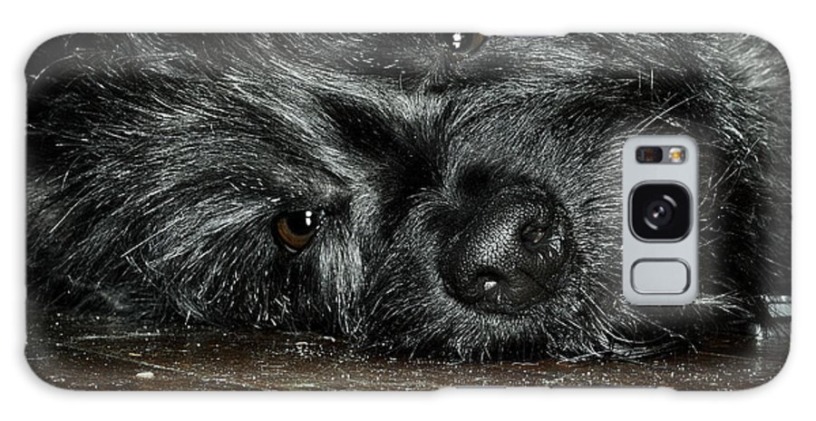 Pet Galaxy S8 Case featuring the photograph Scruff by Brian Archer