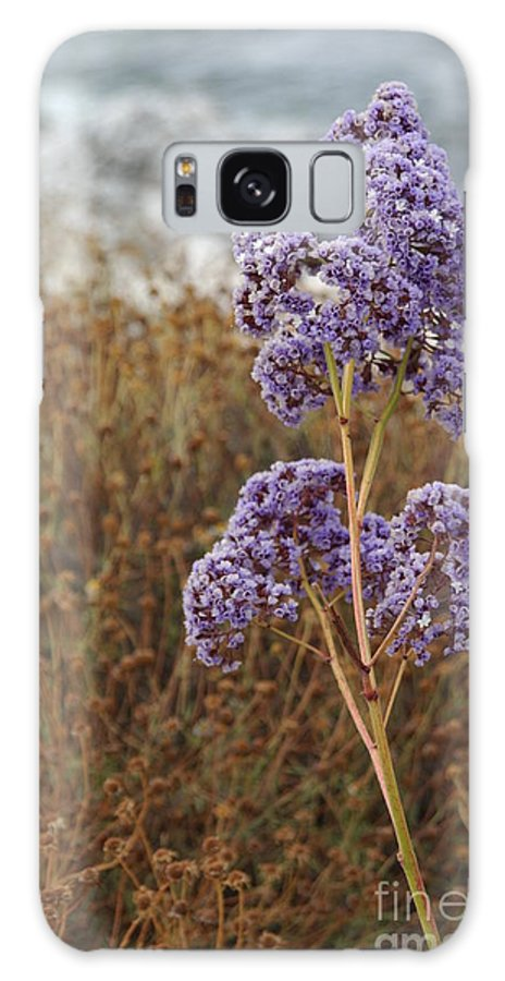 Flower Galaxy S8 Case featuring the photograph Sea Lavender In La Jolla by Anna Lisa Yoder