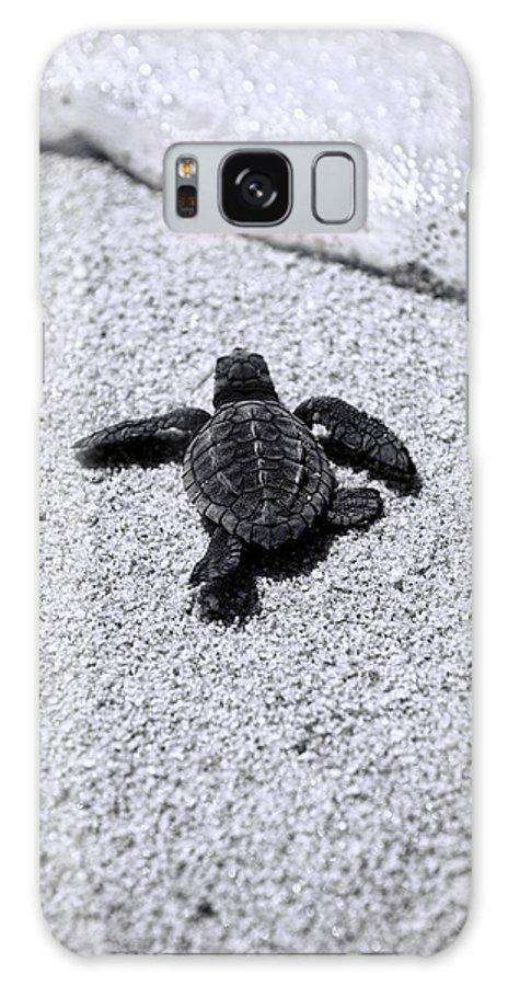 Baby Loggerhead Galaxy Case featuring the photograph Sea Turtle by Sebastian Musial