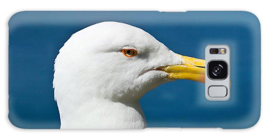 Alone Galaxy S8 Case featuring the photograph Seagull Portrait by Antonio Scarpi