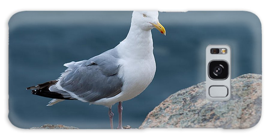 Acadia National Park Galaxy S8 Case featuring the photograph Seagull by Sebastian Musial