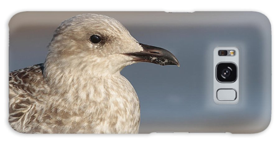 Seagull Galaxy S8 Case featuring the photograph Seagull by Simon Gregory