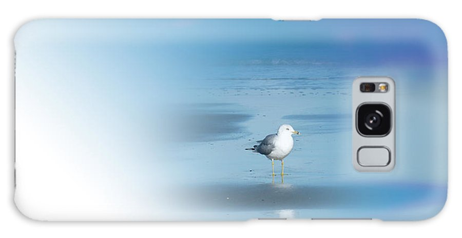 Seagull Galaxy S8 Case featuring the photograph Seagull Standing Photo by Frank Bright