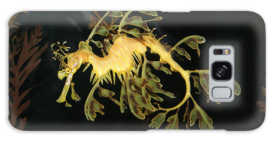 Sea Galaxy S8 Case featuring the photograph Seahorse Shuffle by Laura Paine