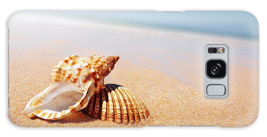 Abstract Galaxy Case featuring the photograph Seashell And Conch by Carlos Caetano