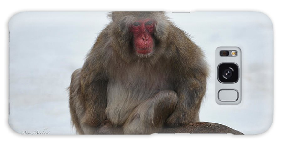 Japanese Macaque Galaxy S8 Case featuring the photograph Seated Macaque Snow Monkey by Mary Machare